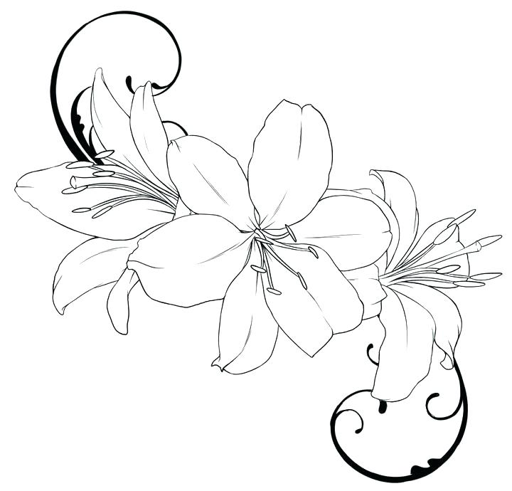 720x690 Roses Outline Drawing Hibiscus Flower Tattoo Outline Flowers Ideas
