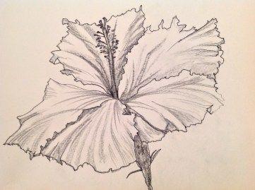 361x269 Hibiscus Flower Pen Ink Drawings Art Love Light Pen
