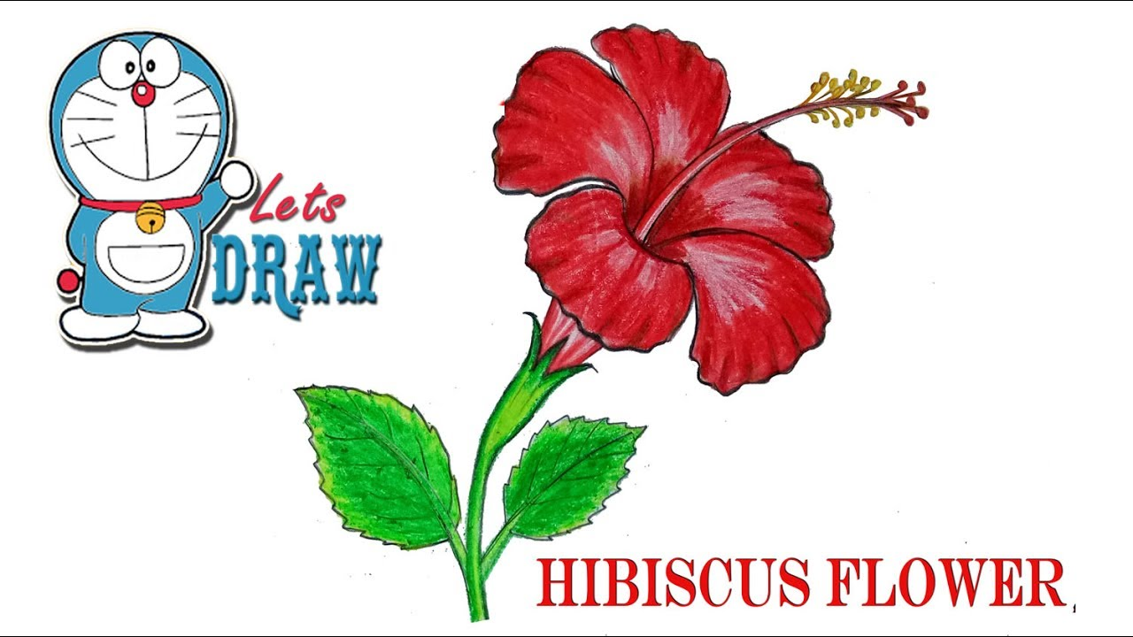1280x720 How To Draw A China Rose Hibiscus Flower Step By Step (Very Easy