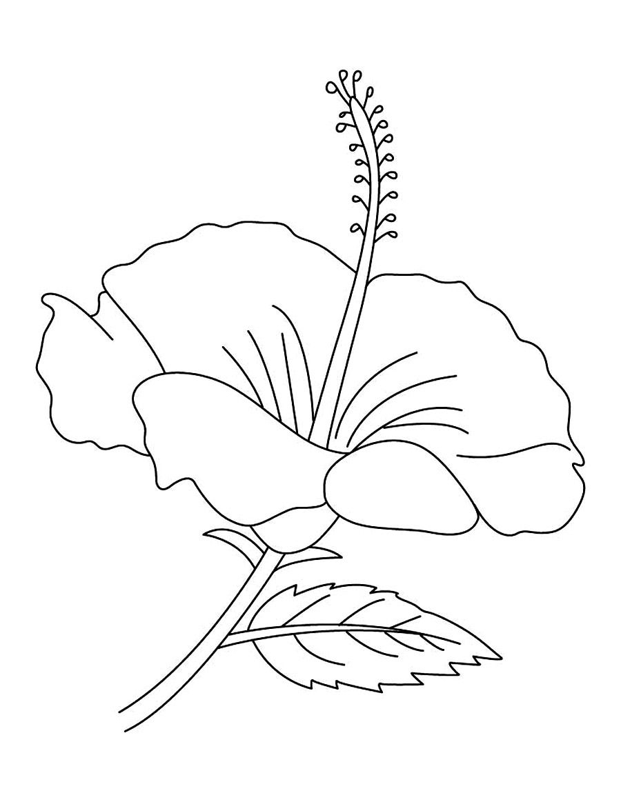 900x1163 Fresh Hibiscus Flower Coloring Pages Collection Printable