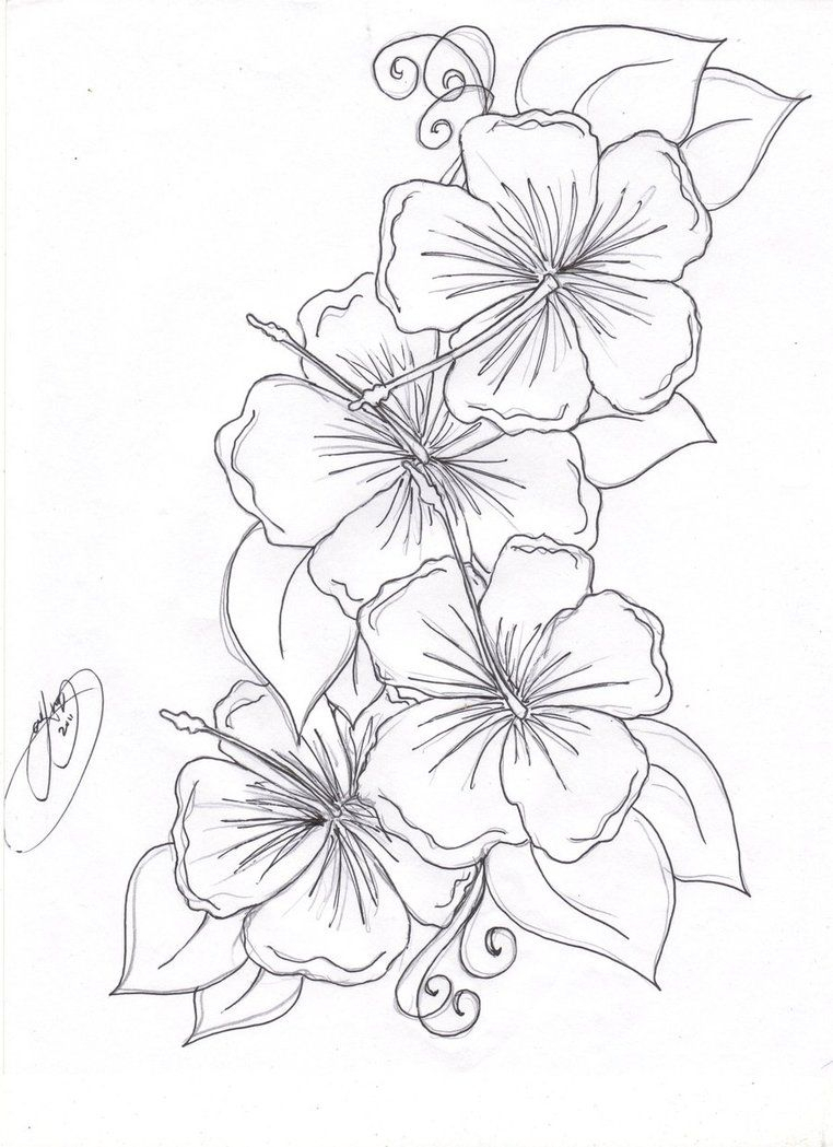762x1049 Hawaiian Flower Drawing Hummingbird Hibiscus Tattoo Drawing