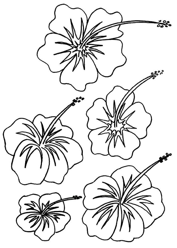 731x1024 Hawaiian Flowers Drawing