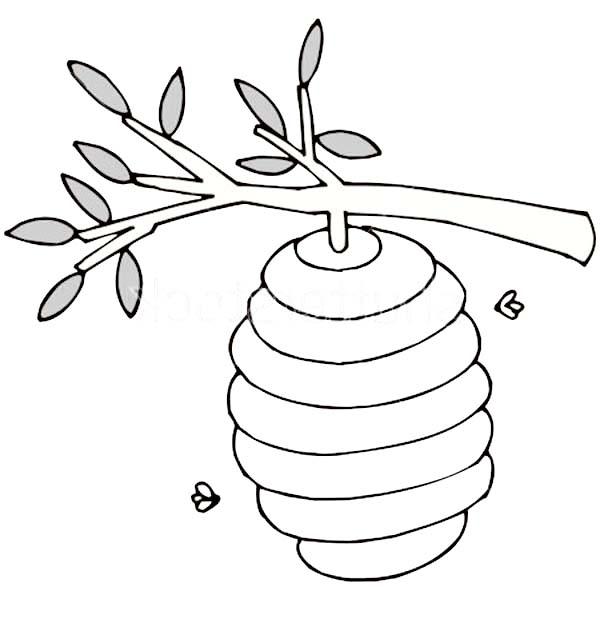Hive Drawing