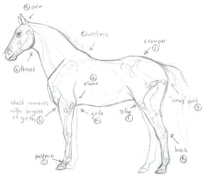 421x360 How To Draw A Realistic Horse Together With Tutorial How To Draw