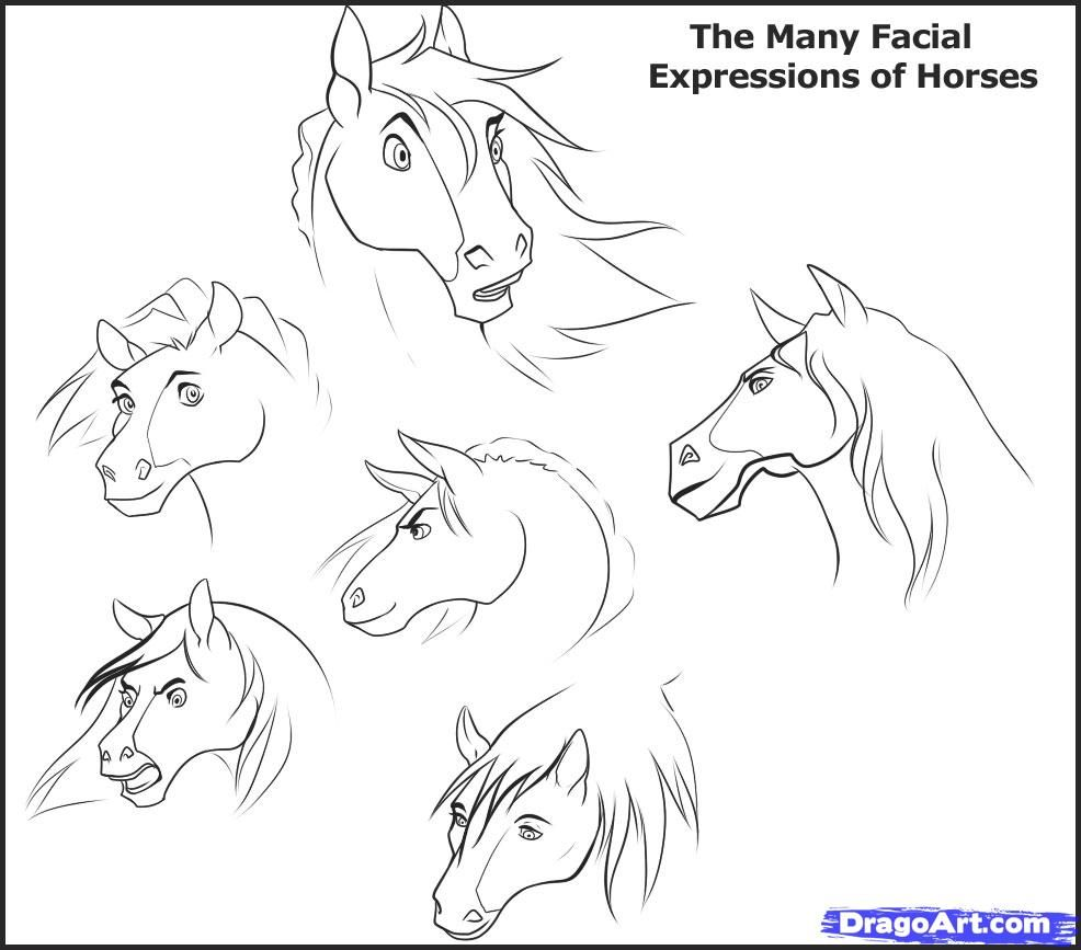 986x867 Now, This Is A Sketch Or Example On How A Horses Jaw Or Underside