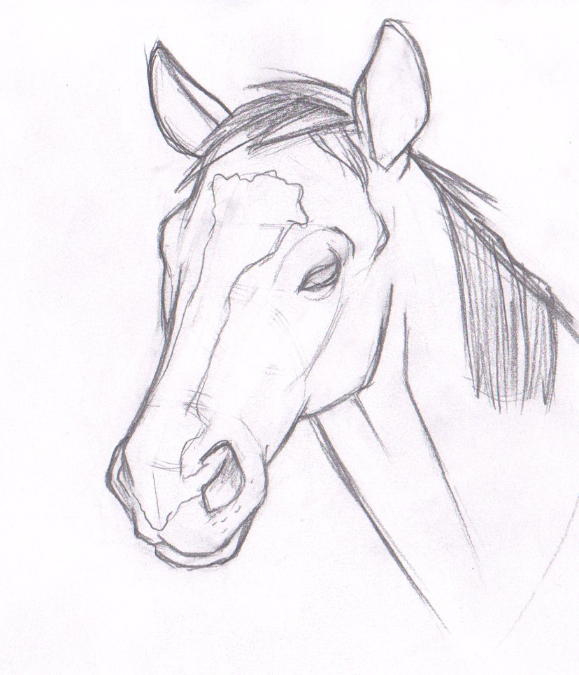 828x965 A Drawing Of A Horse Head