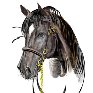300x300 Horse's Head, Drawing From The Front View