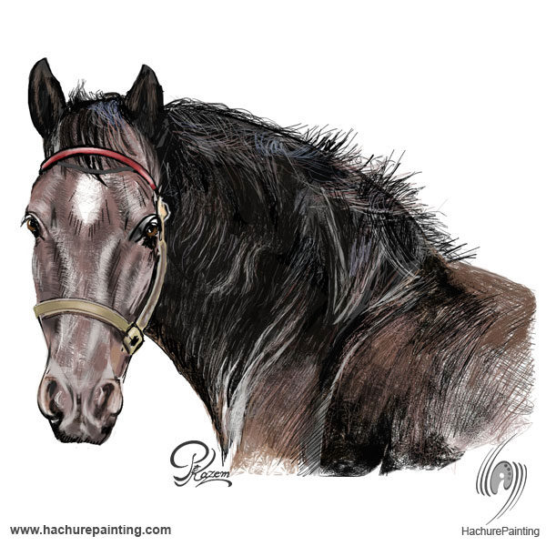 600x600 Horse's Head, Drawing From The Front View Tutorial