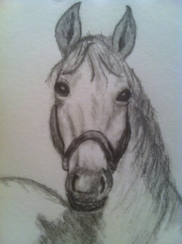 772x1034 Pencil Study Horse Head Front View By Piroscsizma