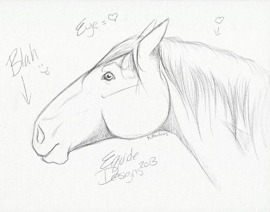 900x706 Horse Head Sketch By Equidedesigns