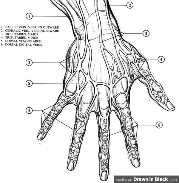Human Skeleton Drawing Reference