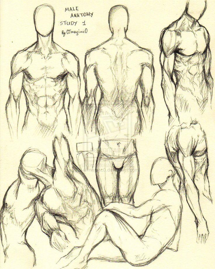 736x918 Best 207 Anatomy Ideas On Human Anatomy, Anatomy