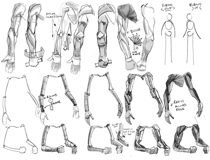 Human Skeleton Drawing Reference at GetDrawings.com   Free for ...