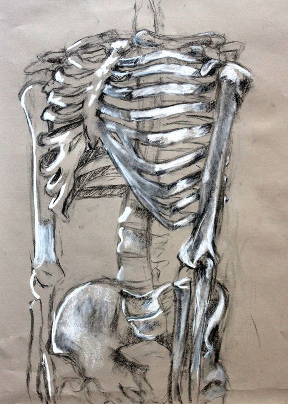 564x790 Pin By Karlo On Reference Anatomy, Draw And Skeletons