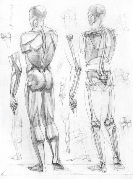 450x604 638 Best Artist Images On Anatomy Reference, Anatomy