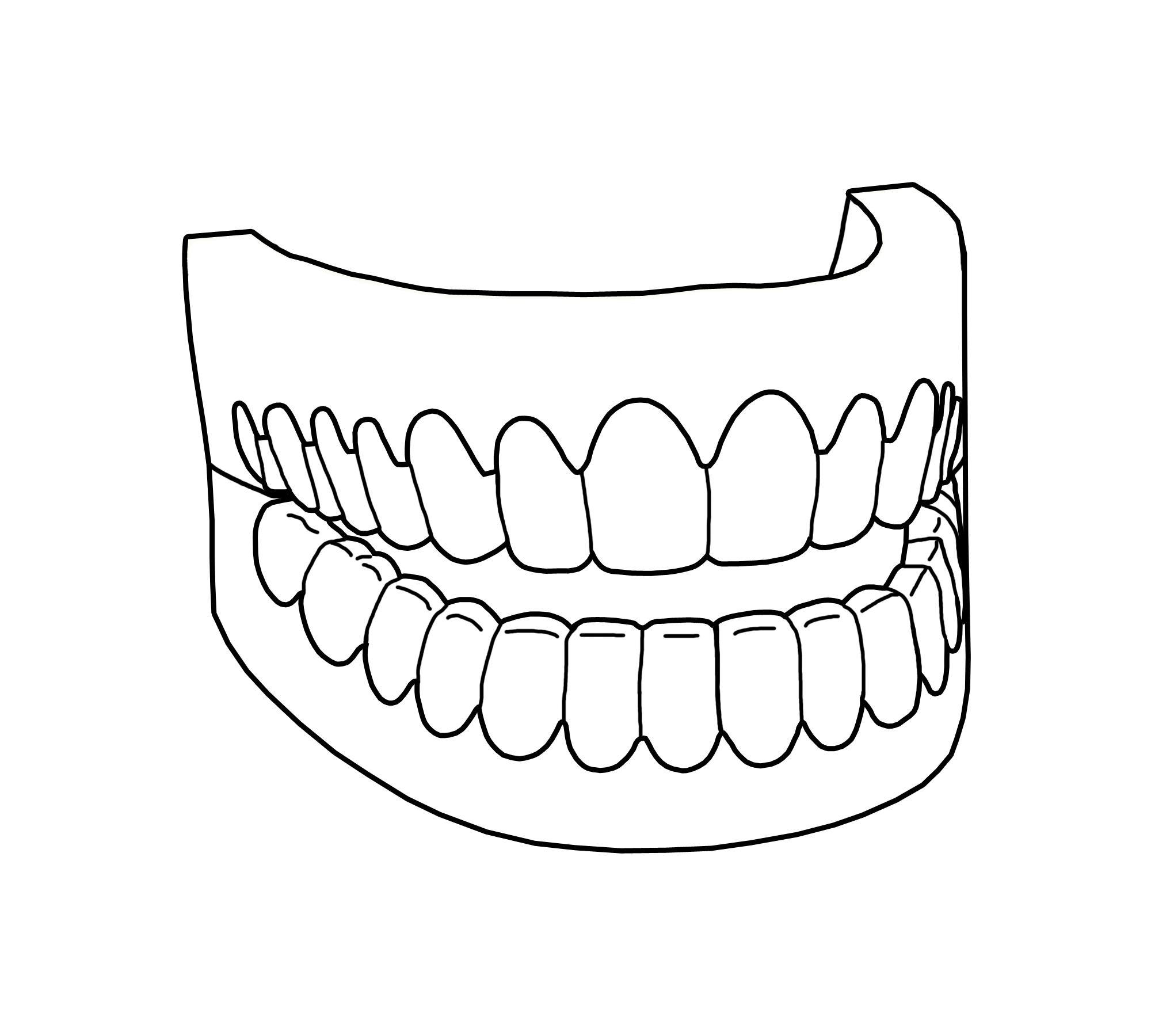 Human Teeth Drawing At Getdrawings Free For Personal Use Human