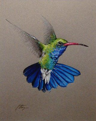 320x402 Pencil drawings of hummingbirds Southwest Plant And Wildlife