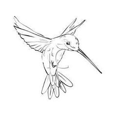 236x236 How To Draw A Bird Step By Step Easy With Pictures