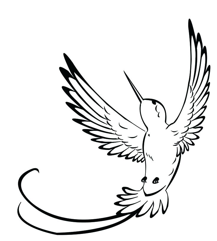 736x818 Hummingbird Drawing Outline How To Draw A R Hummingbird Outline