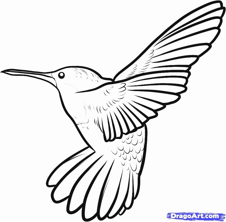 736x724 Hummingbird Drawing Step By Step Lovely Birds Outlines Graphics