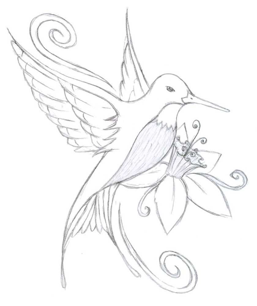 840x999 Simple Hummingbird Sketch Coloring Pages Humming Bird Drawing