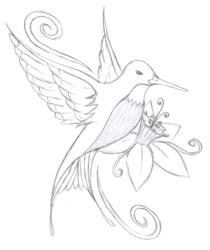 736x876 The 23 Best Hummingbird Outline Tattoo Images