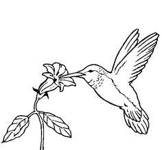 236x219 Hummingbird Outline Drawings