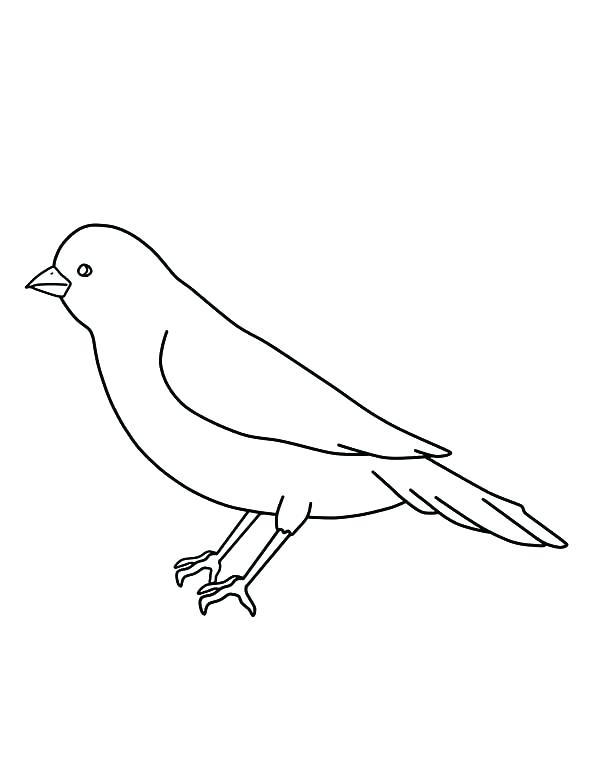 600x776 Bird Outline Bird Silhouette Bird Outline Images Bird Outline Bird
