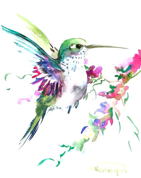 474x599 Hummingbird Drawing Hummingbird Art Original Watercolor Painting 8