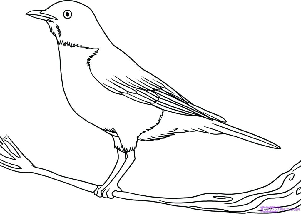 1024x728 Bird Outline Drawing Fascinating Bird Outline Drawing Of A Sketch
