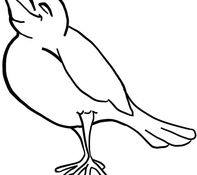 678x600 Birds Outline Collection Birds Outline Hummingbird Tattoo Outline