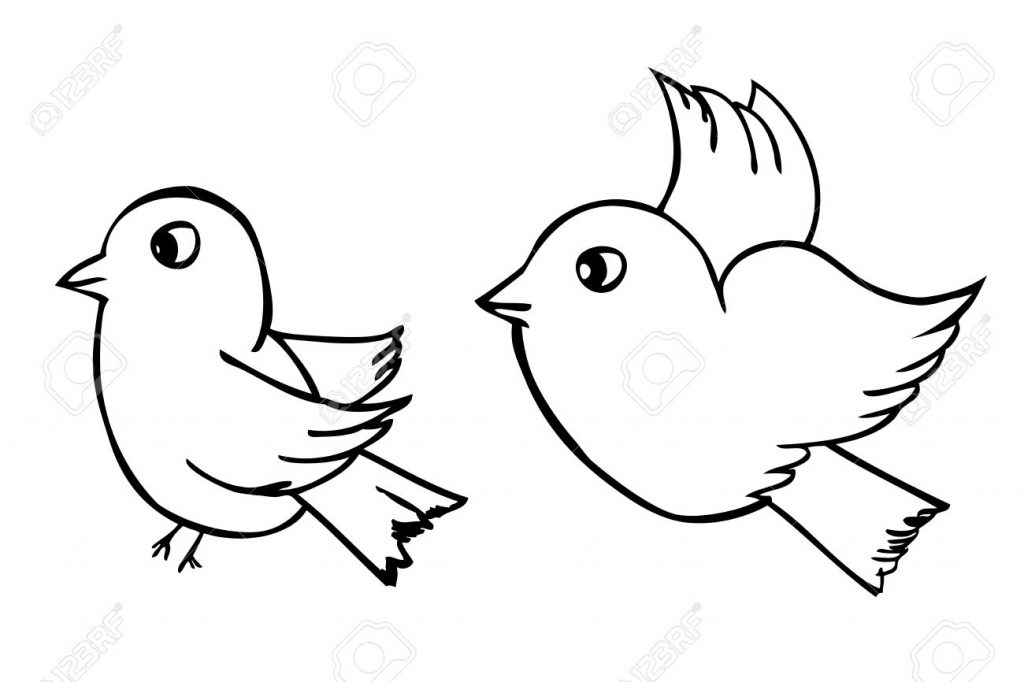 1024x682 Colorful Bird Outline Drawing Draw Hummingbirds Simple