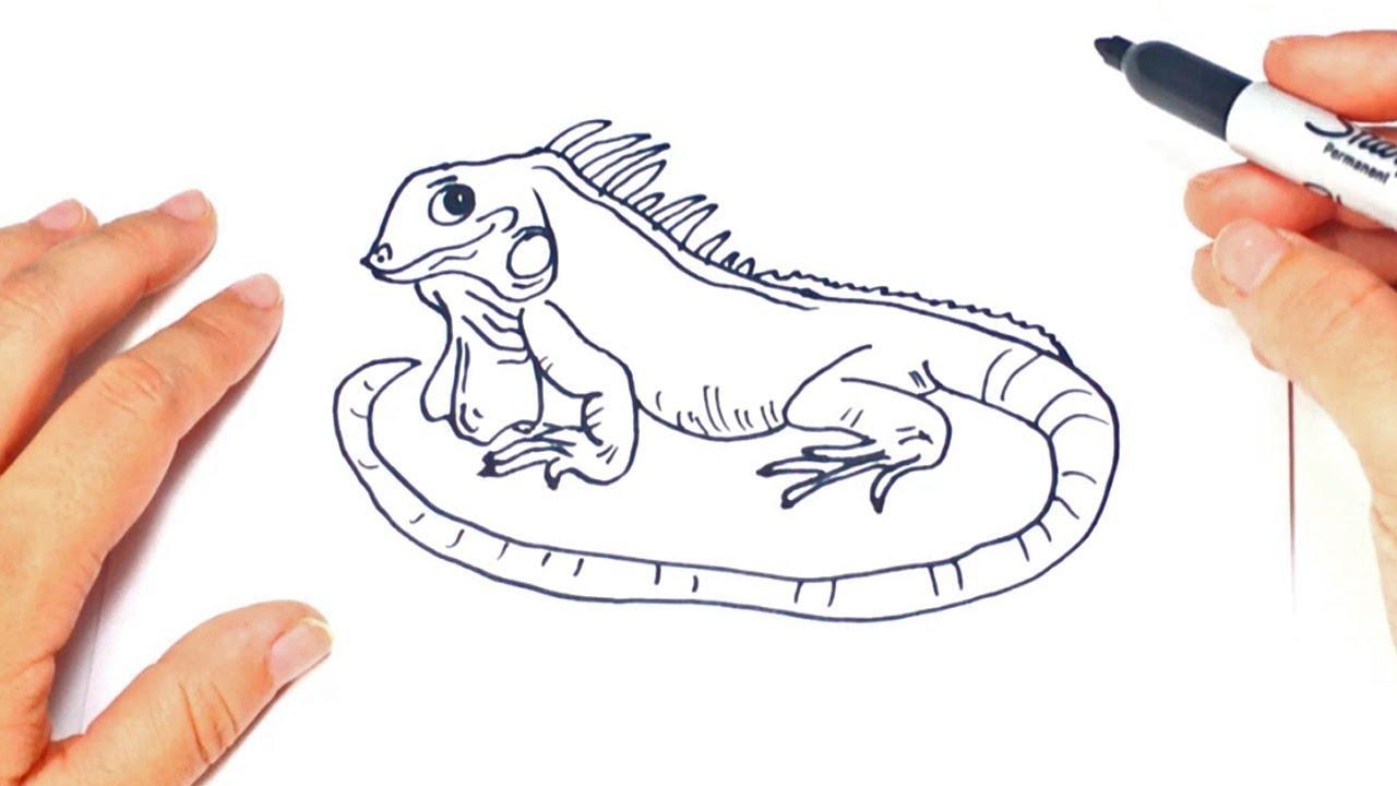 1280x720 How To Draw A Iguana Step By Step Iguana Drawing Lesson