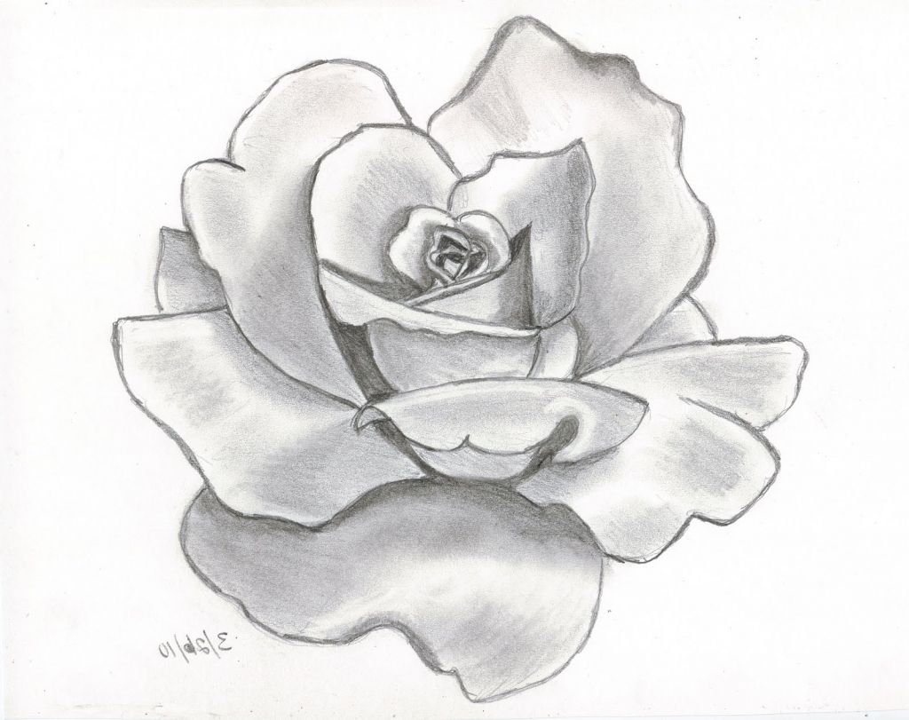 1024x811 Pencil Sketch Drawing Of Flowers