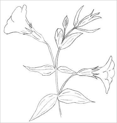 373x392 Easy Flower Drawings In Pencil Drawing Flowers With Pencil Google