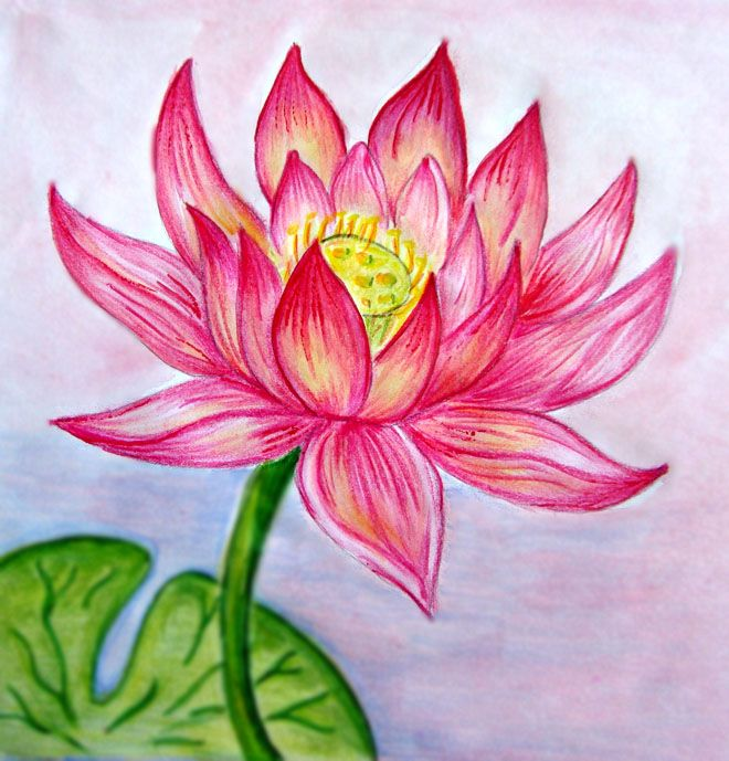 660x689 45 Beautiful Flower Drawings And Realistic Color Pencil Drawings