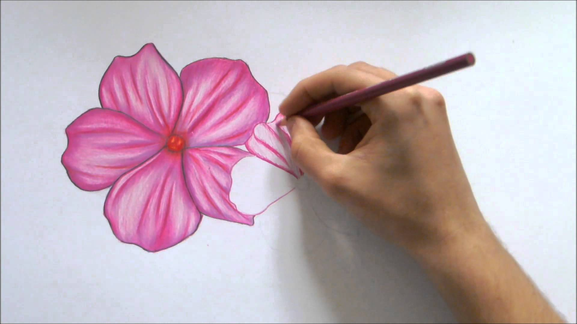 1920x1080 How To Draw A Flower Color Pencil Drawing