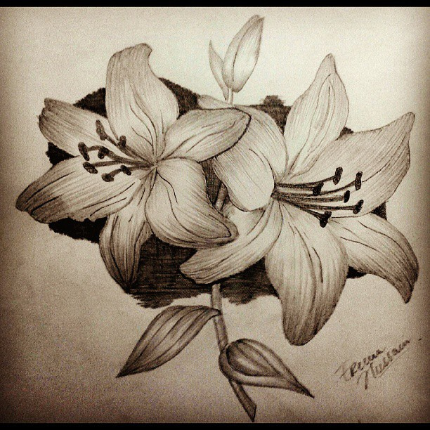 Simple Pencil Drawing Pictures Of Flowers Flowers Healthy