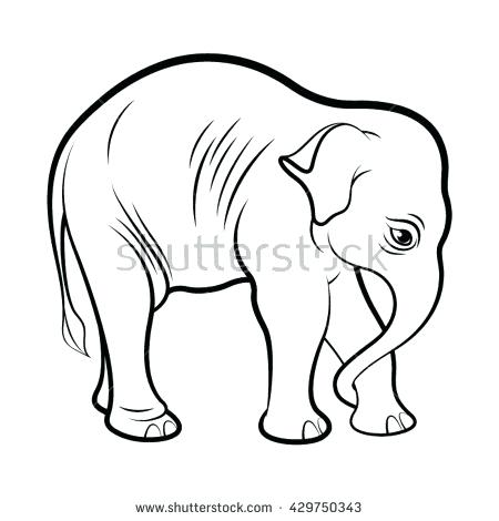 450x470 Indian Elephant Outline Drawing Printable Coloring Baby Elephant