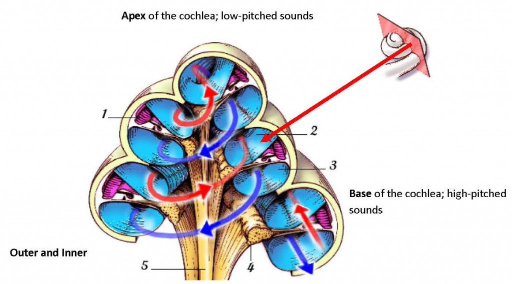 1024x569 Vr4 Hearing Loss 1 The Auditory System