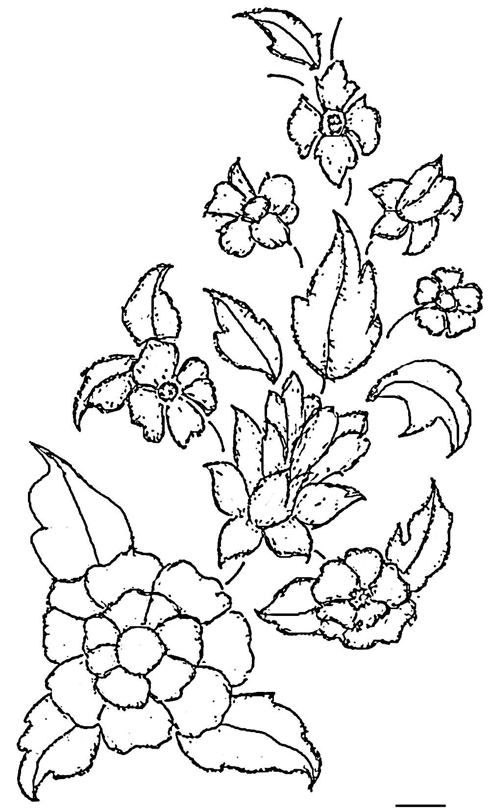 1000x1649 Guaranteed Flower Outline Printable Pattern For Jack O Lantern