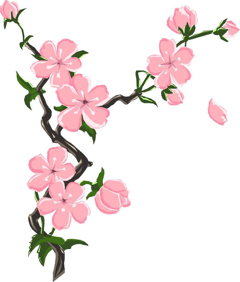 764x900 Cherry Blossom Drawing Cherry Blossoms Drawing Japanese Cherry