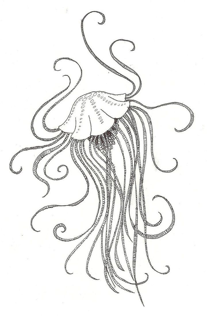 Jellyfish Drawing Color