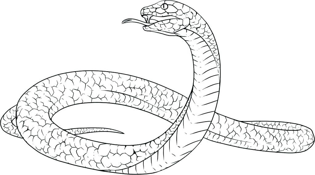 king cobra coloring page - king cobra snake drawing at free for