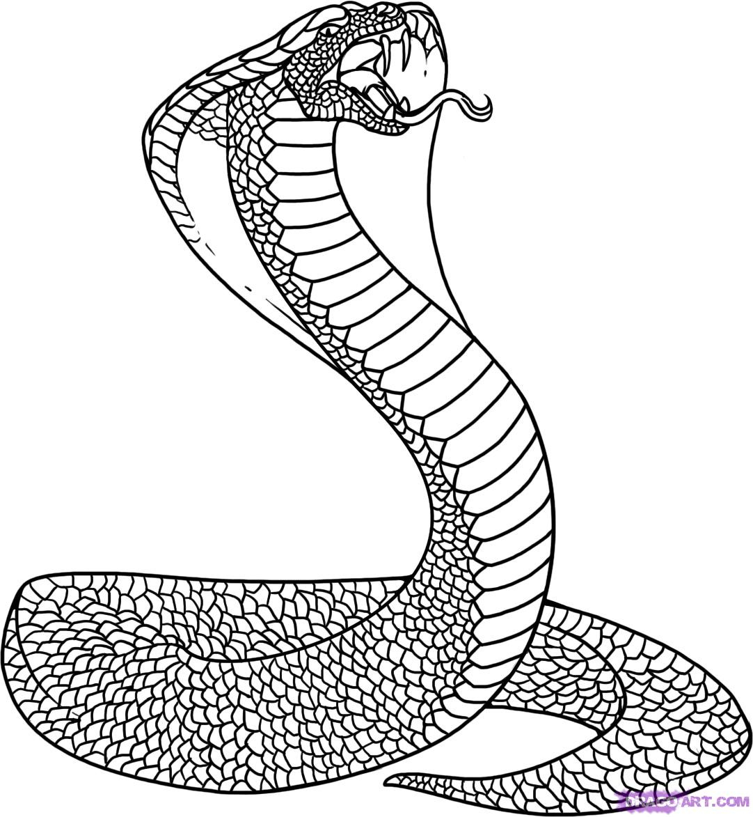 How to draw a king cobra