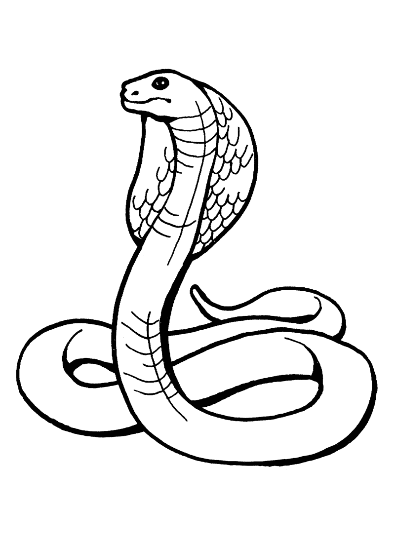 800x1100 Printable King Cobra Snake Coloring Pages