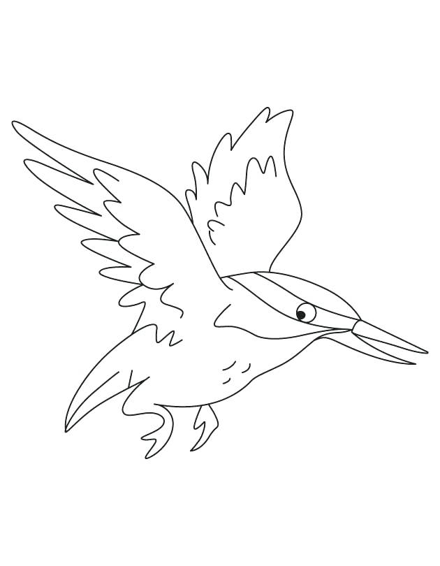 630x810 Kingfisher Animal Coloring Pages Flying Kingfisher Coloring Pages