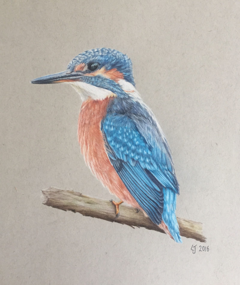 Kingfisher Drawing At Getdrawings Free For Personal Use
