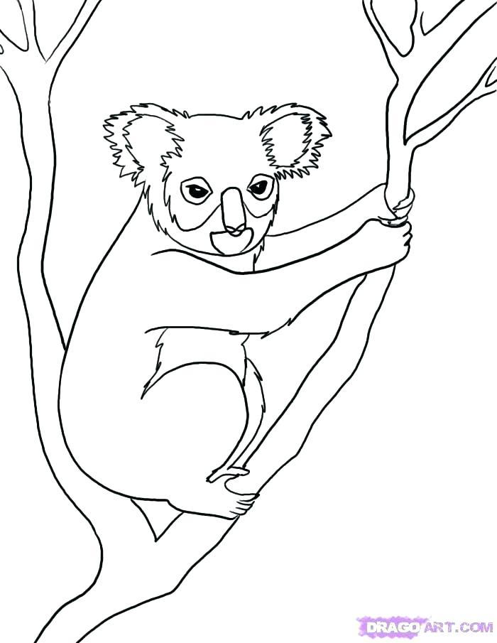 700x905 What Color Is A Koala Bear Grey Koala Bear 4 Paint Color Koala