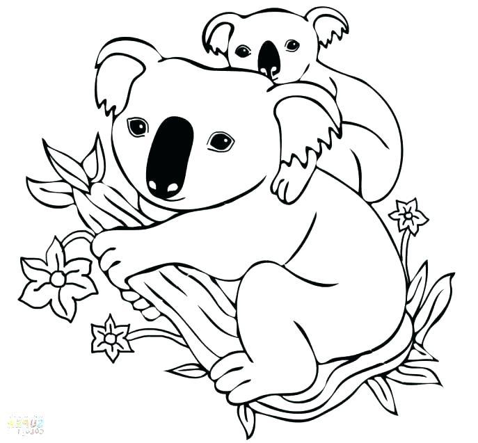 687x637 Koala Bear Coloring Pages Koala Bear Coloring Pages Koala Coloring